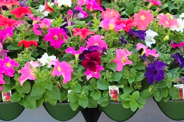 SHUTTLE POT® Flower Pots