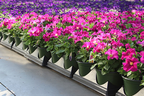 SHUTTLE TRAY® Flower Trays